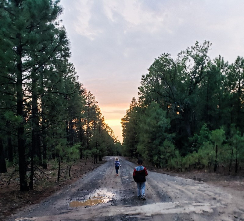 Two children walking on a family hiking trail in the forest at sunset