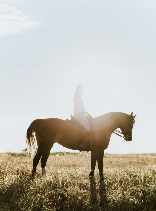A woman riding a horse in a field near Big Sky Montana