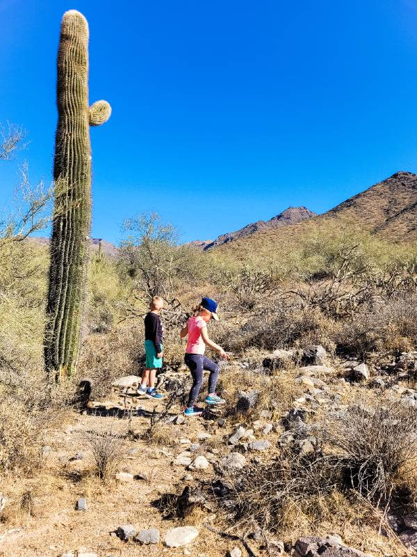 Two children walking in the desert near a saguaro cactus while on a family hiking trip