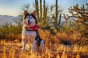 A dog in the desert in Phoenix, one of the best destinations for dog friendly vacations