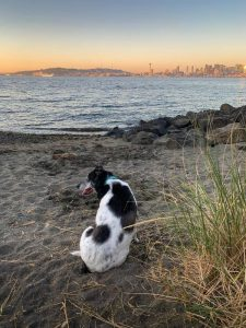 A dog in the beach near Seattle, one of the world's most dog friendly cities