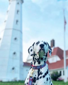 A dalmatian in front of the North Point Lighthouse in Milwaukee, one of the most dog friendly cities in the US