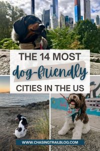 Three individual photos of dogs in the most dog friendly cities in the US: NYC, Seattle, and Miami.