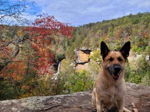 A dog in front of a waterfall near Chattanooga, one of the country's most dog friendly cities