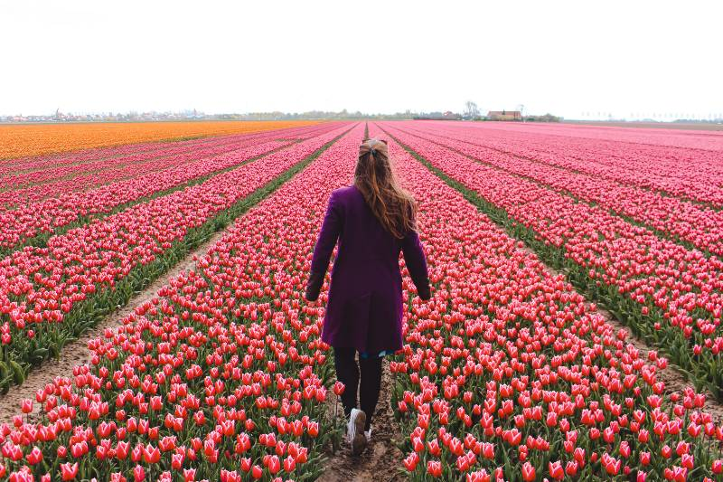 A woman walking through a tulip field in the Netherlands, one of the most underrated countries to visit