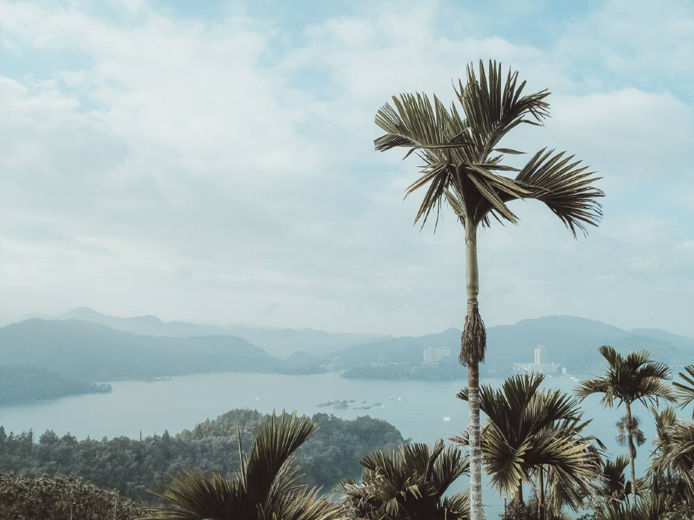 Mountains, cliffs, the sea, and palm trees in Taiwan, one of the most underrated countries to visit
