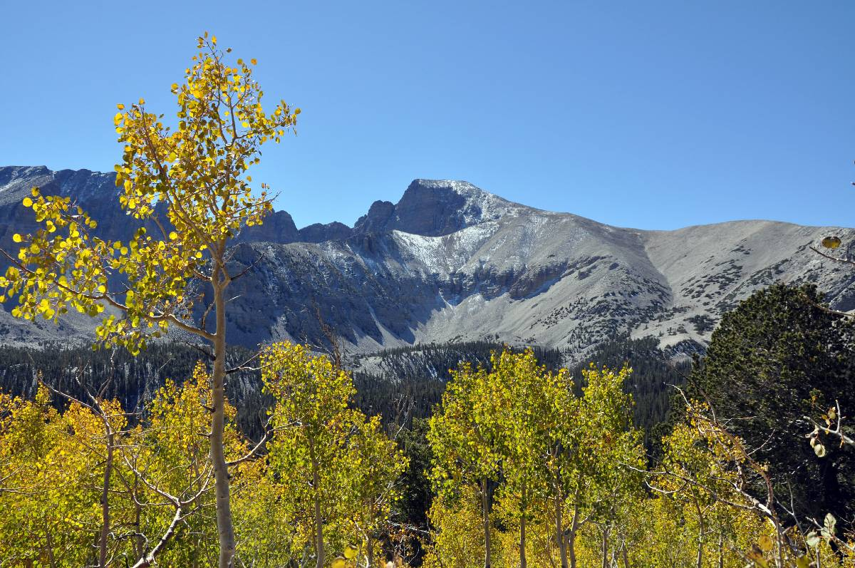 Wheeler Peak behind yellow trees in Great Basin National Park, one of America's must-see national parks