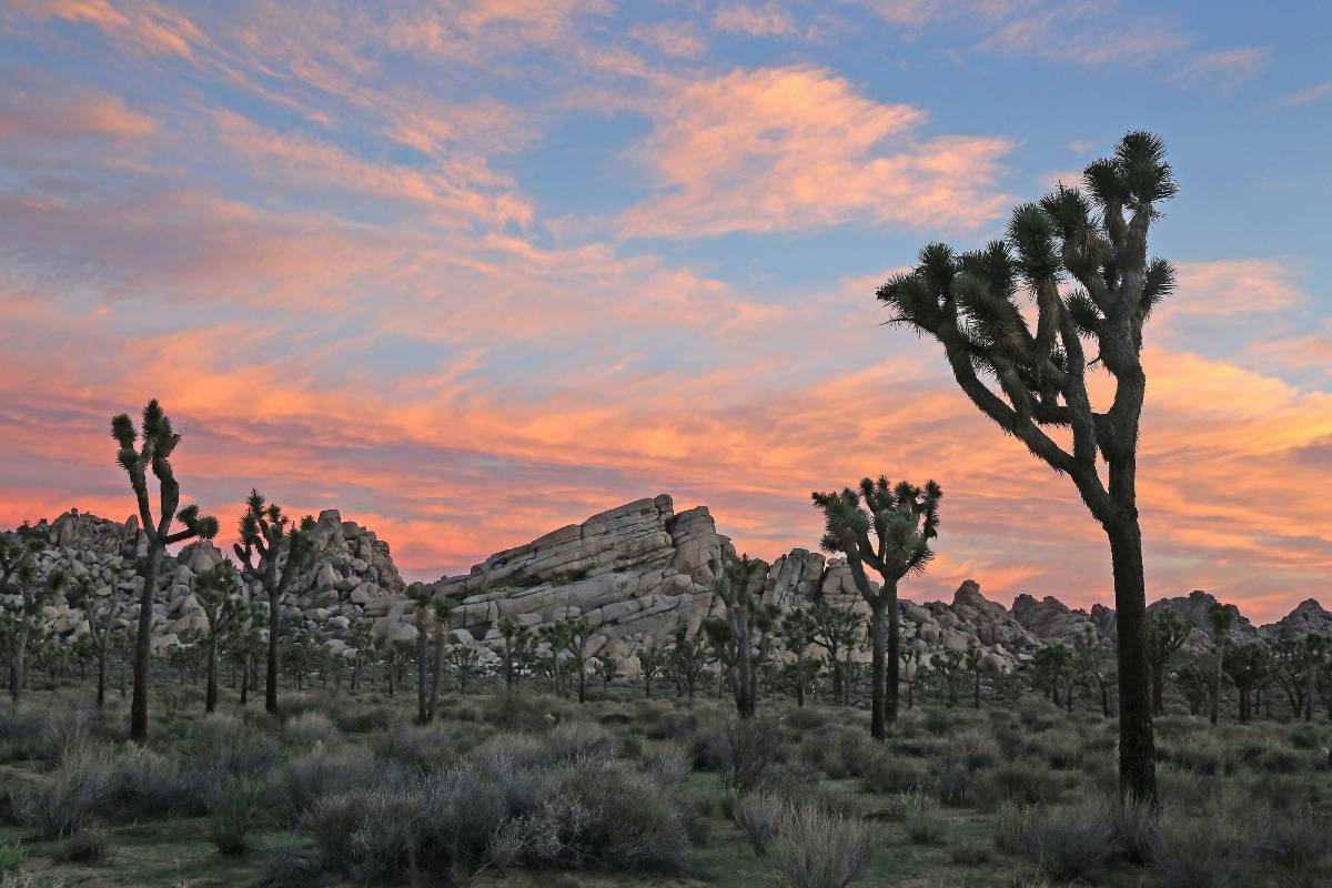 Several Joshua trees and some rock formations at sunrise in Joshua Tree, one of America's must-visit national parks