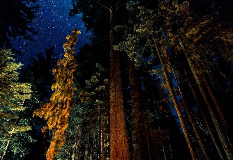 An orange tent in the forest with tons of stars overhead in the night sky